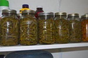 Taze fasulye konservesi