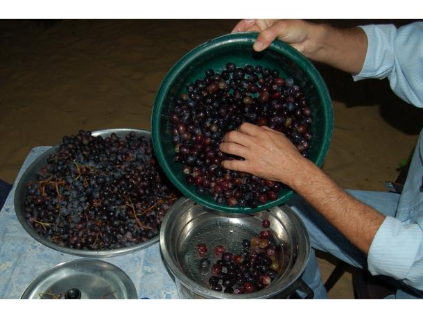 Evde şarap yapımı